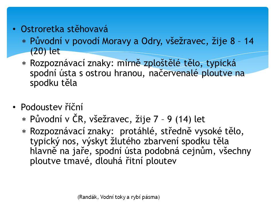 Ostroretka stěhovavá  Původní v povodí Moravy a Odry, všežravec, žije 8 – 14 (20) let  Rozpoznávací znaky: mírně zploštělé tělo, typická spodní ústa s ostrou hranou, načervenalé ploutve na spodku těla Podoustev říční  Původní v ČR, všežravec, žije 7 – 9 (14) let  Rozpoznávací znaky: protáhlé, středně vysoké tělo, typický nos, výskyt žlutého zbarvení spodku těla hlavně na jaře, spodní ústa podobná cejnům, všechny ploutve tmavé, dlouhá řitní ploutev (Randák, Vodní toky a rybí pásma)
