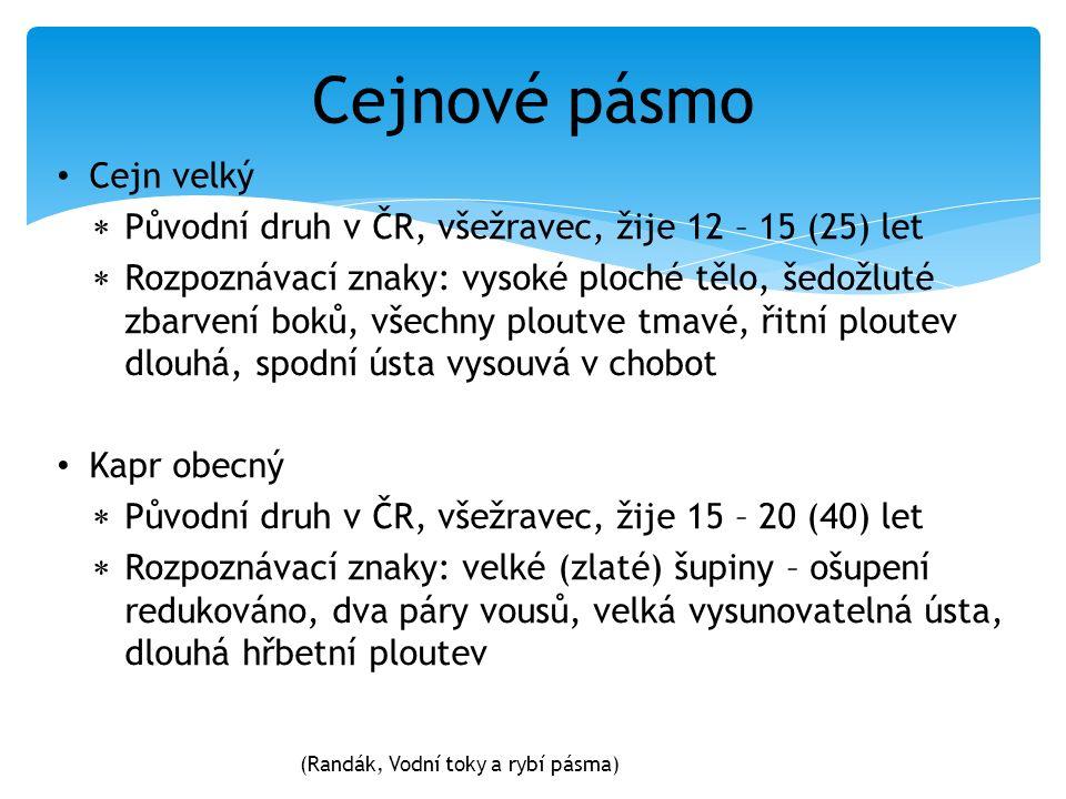 Cejnové pásmo Cejn velký  Původní druh v ČR, všežravec, žije 12 – 15 (25) let  Rozpoznávací znaky: vysoké ploché tělo, šedožluté zbarvení boků, všec