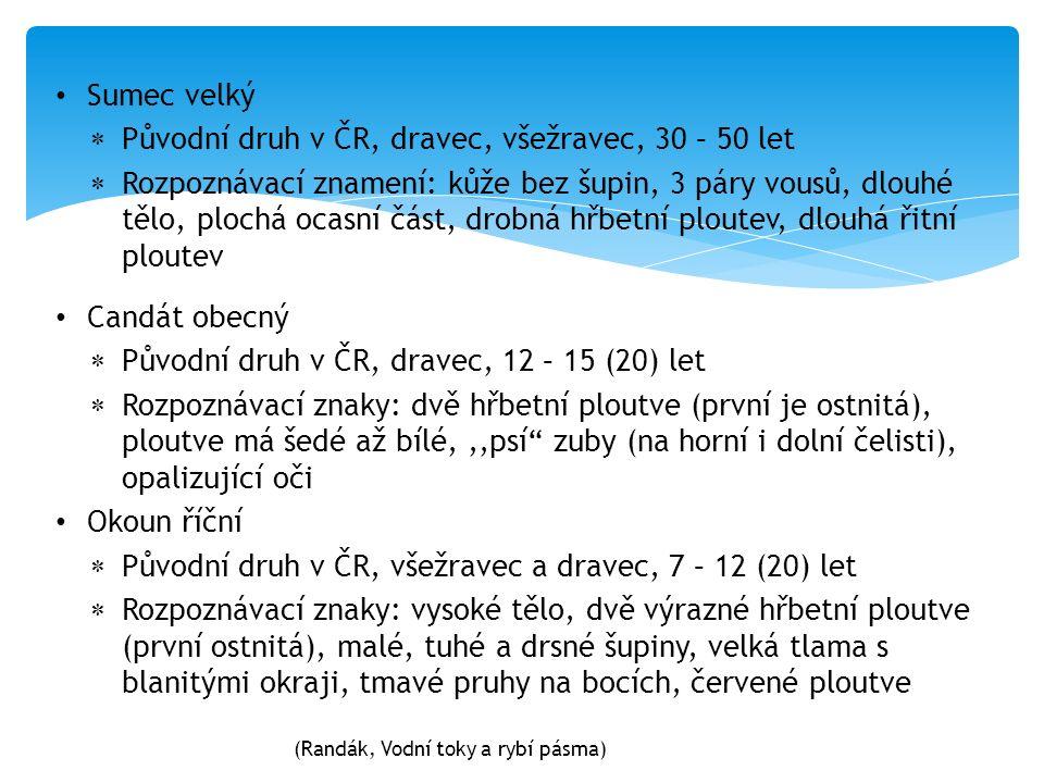 Candát obecný  Původní druh v ČR, dravec, 12 – 15 (20) let  Rozpoznávací znaky: dvě hřbetní ploutve (první je ostnitá), ploutve má šedé až bílé,,,psí zuby (na horní i dolní čelisti), opalizující oči Okoun říční  Původní druh v ČR, všežravec a dravec, 7 – 12 (20) let  Rozpoznávací znaky: vysoké tělo, dvě výrazné hřbetní ploutve (první ostnitá), malé, tuhé a drsné šupiny, velká tlama s blanitými okraji, tmavé pruhy na bocích, červené ploutve Sumec velký  Původní druh v ČR, dravec, všežravec, 30 – 50 let  Rozpoznávací znamení: kůže bez šupin, 3 páry vousů, dlouhé tělo, plochá ocasní část, drobná hřbetní ploutev, dlouhá řitní ploutev (Randák, Vodní toky a rybí pásma)