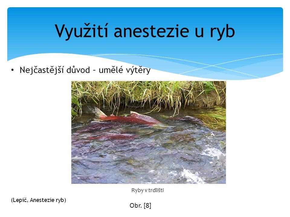 Nejčastější důvod – umělé výtěry Využití anestezie u ryb Ryby v trdlišti Obr. [8] (Lepič, Anestezie ryb)