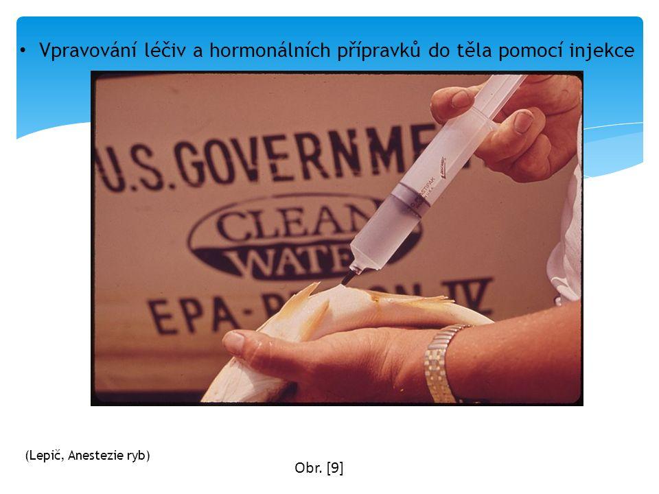 Vpravování léčiv a hormonálních přípravků do těla pomocí injekce Obr. [9] (Lepič, Anestezie ryb)