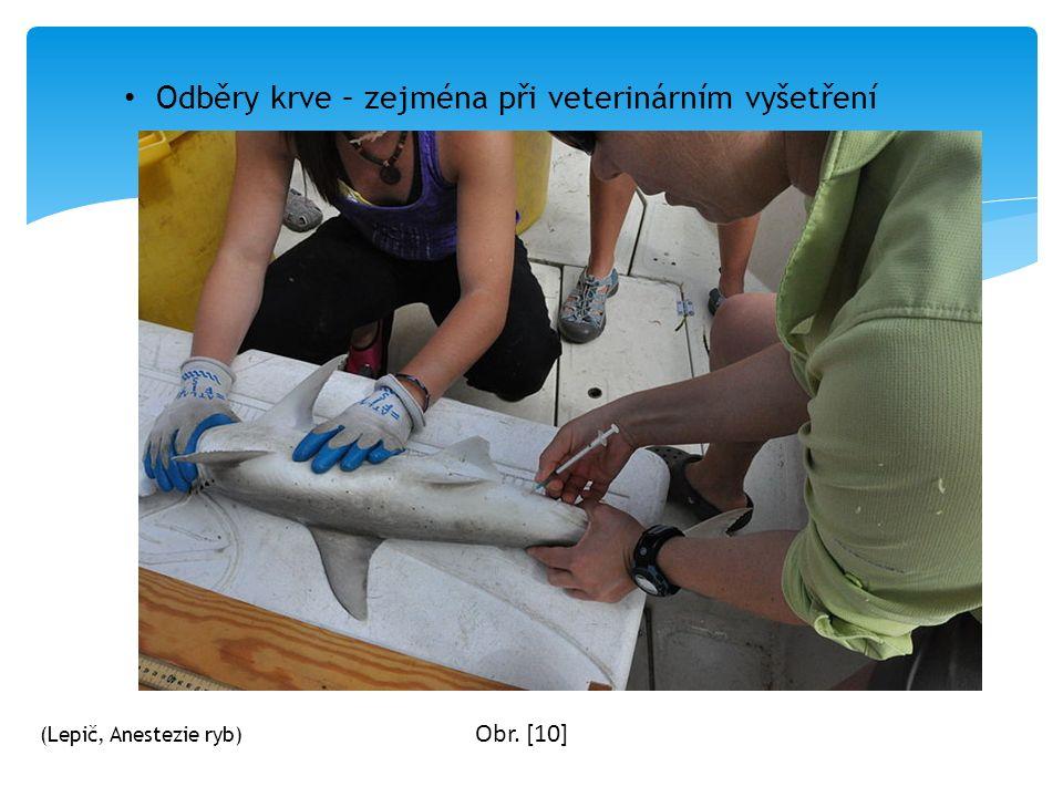 Odběry krve – zejména při veterinárním vyšetření Obr. [10] (Lepič, Anestezie ryb)
