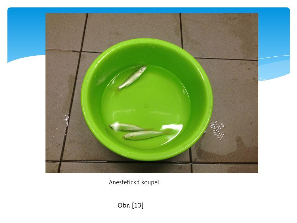 Anestetická koupel Obr. [13]