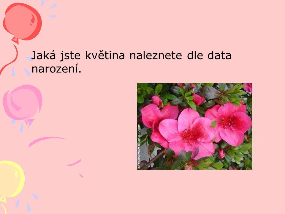 Jaká jste květina naleznete dle data narození.