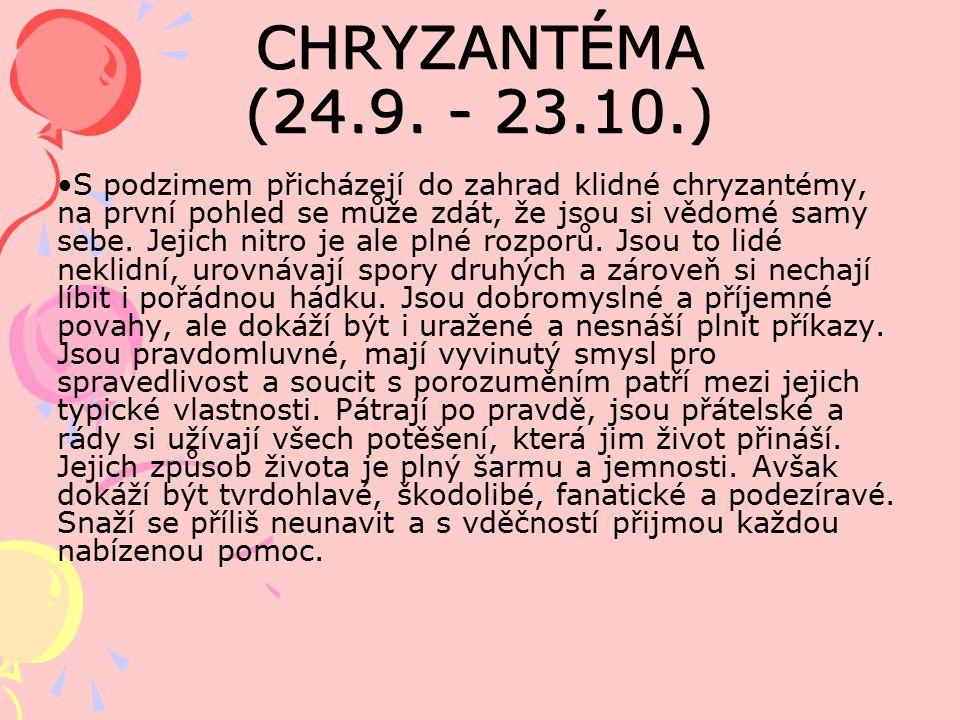 CHRYZANTÉMA (24.9.