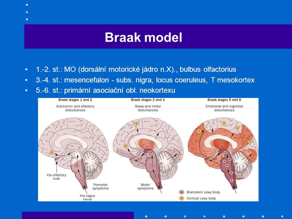 Braak model 1.-2. st.: MO (dorsální motorické jádro n.X)., bulbus olfactorius 3.-4. st.: mesencefalon - subs. nigra, locus coeruleus, T mesokortex 5.-