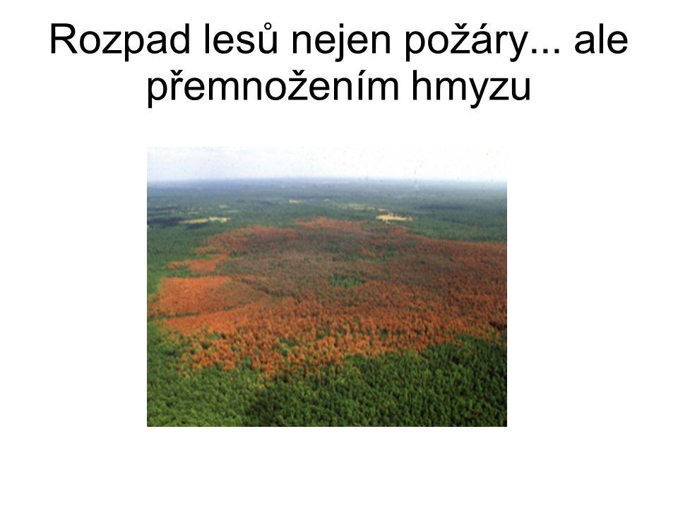 Rozpad lesů nejen požáry... ale přemnožením hmyzu