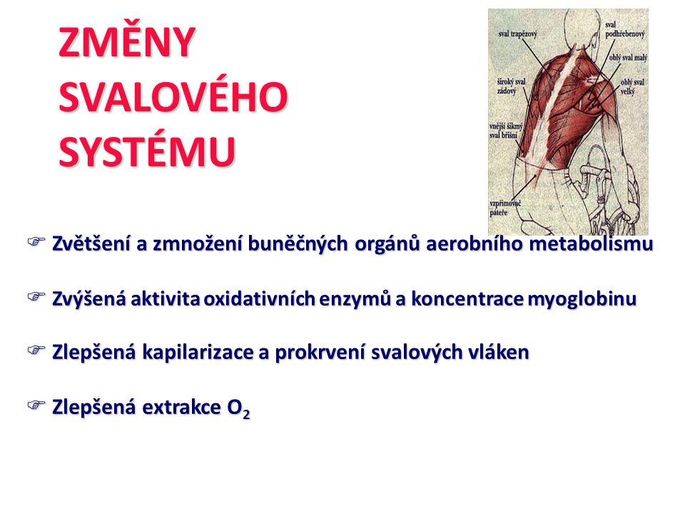 ZMĚNYSVALOVÉHOSYSTÉMU  Zvětšení a zmnožení buněčných orgánů aerobního metabolismu  Zvýšená aktivita oxidativních enzymů a koncentrace myoglobinu  Z