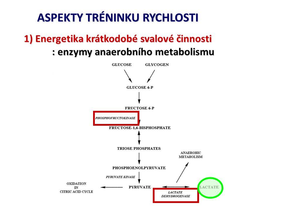 ASPEKTY TRÉNINKU RYCHLOSTI 1) Energetika krátkodobé svalové činnosti : enzymy anaerobního metabolismu