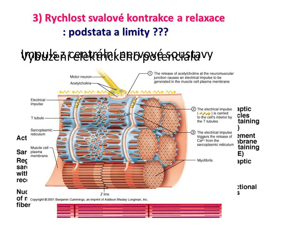 Impuls z centrální nervové soustavy Vybuzení elektrického potenciálu 3) Rychlost svalové kontrakce a relaxace : podstata a limity ???