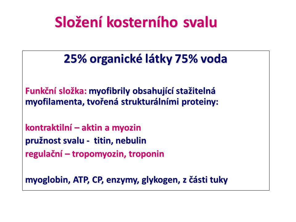 25% organické látky 75% voda Funkční složka: myofibrily obsahující stažitelná myofilamenta, tvořená strukturálními proteiny: kontraktilní – aktin a my