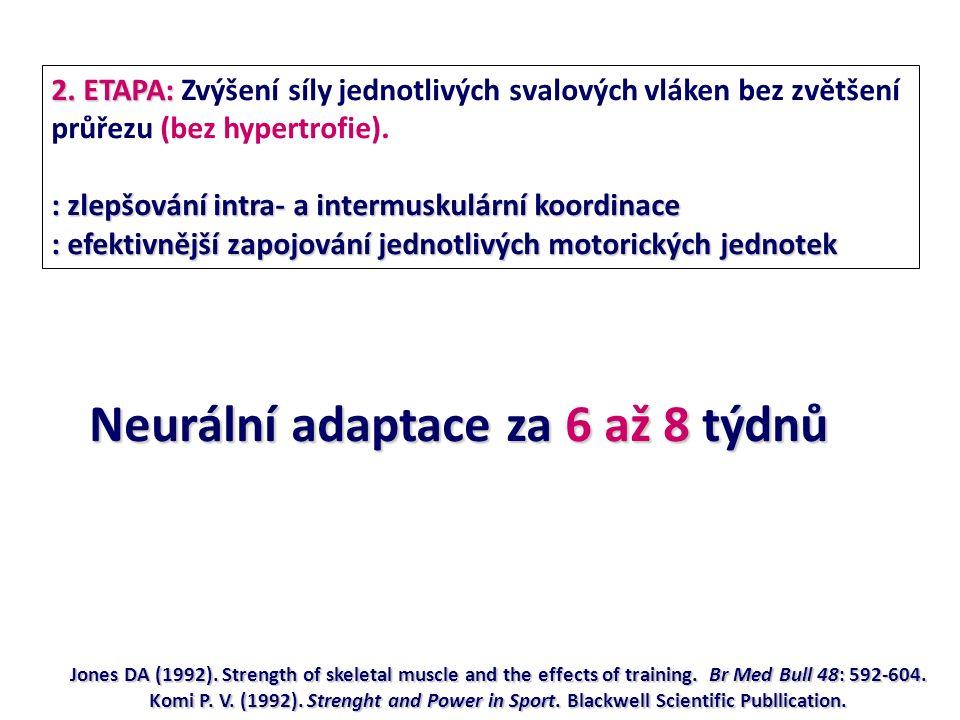 2. ETAPA: 2. ETAPA: Zvýšení síly jednotlivých svalových vláken bez zvětšení průřezu (bez hypertrofie). : zlepšování intra- a intermuskulární koordinac