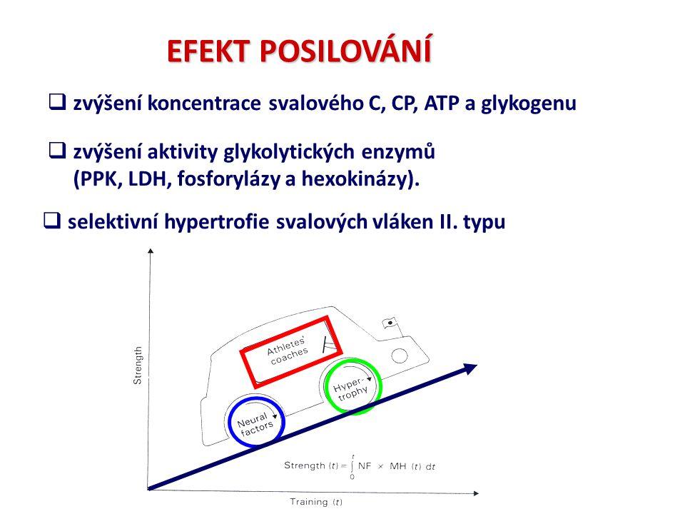  zvýšení koncentrace svalového C, CP, ATP a glykogenu  zvýšení aktivity glykolytických enzymů (PPK, LDH, fosforylázy a hexokinázy).  selektivní hyp