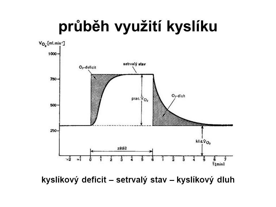 průběh využití kyslíku kyslíkový deficit – setrvalý stav – kyslíkový dluh