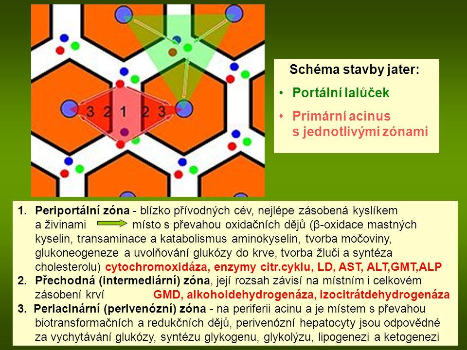 1.Periportální zóna - blízko přívodných cév, nejlépe zásobená kyslíkem a živinami místo s převahou oxidačních dějů ( β -oxidace mastných kyselin, transaminace a katabolismus aminokyselin, tvorba močoviny, glukoneogeneze a uvolňování glukózy do krve, tvorba žluči a syntéza cholesterolu) cytochromoxidáza, enzymy citr.cyklu, LD, AST, ALT,GMT,ALP 2.Přechodná (intermediární) zóna, její rozsah závisí na místním i celkovém zásobení krví GMD, alkoholdehydrogenáza, izocitrátdehydrogenáza 3.
