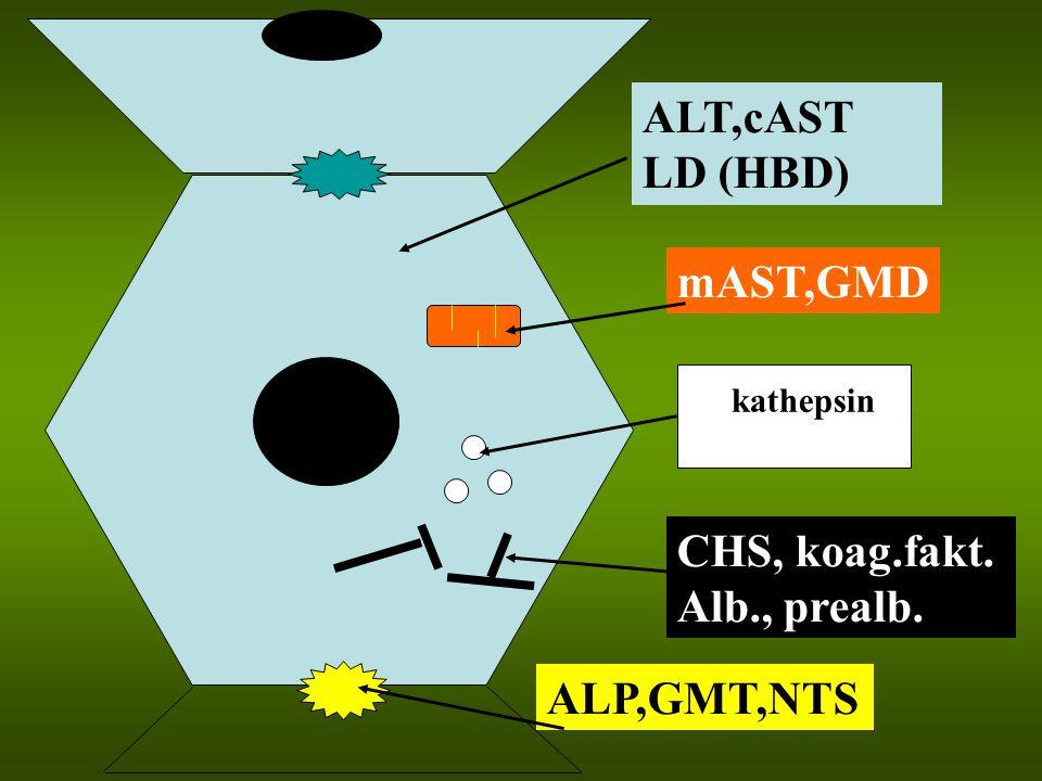 ALT,cAST LD (HBD) mAST,GMD kathepsin CHS, koag.fakt. Alb., prealb. ALP,GMT,NTS