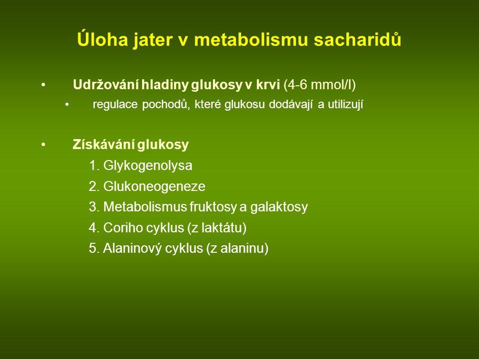 Úloha jater v metabolismu sacharidů Udržování hladiny glukosy v krvi (4-6 mmol/l) regulace pochodů, které glukosu dodávají a utilizují Získávání glukosy 1.
