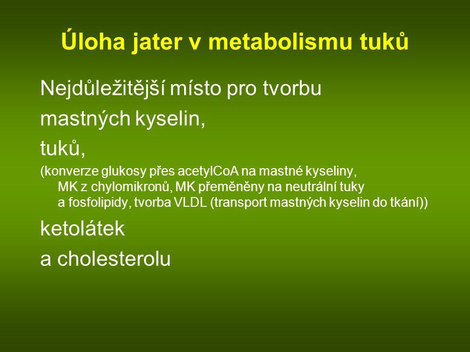 Úloha jater v metabolismu tuků Nejdůležitější místo pro tvorbu mastných kyselin, tuků, (konverze glukosy přes acetylCoA na mastné kyseliny, MK z chylomikronů, MK přeměněny na neutrální tuky a fosfolipidy, tvorba VLDL (transport mastných kyselin do tkání)) ketolátek a cholesterolu