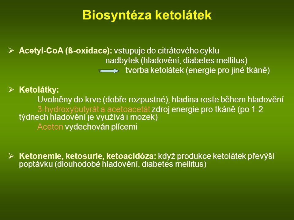 Biosyntéza ketolátek  Acetyl-CoA (ß-oxidace): vstupuje do citrátového cyklu nadbytek (hladovění, diabetes mellitus) tvorba ketolátek (energie pro jiné tkáně)  Ketolátky: Uvolněny do krve (dobře rozpustné), hladina roste během hladovění 3-hydroxybutyrát a acetoacetát zdroj energie pro tkáně (po 1-2 týdnech hladovění je využívá i mozek) Aceton vydechován plícemi  Ketonemie, ketosurie, ketoacidóza: když produkce ketolátek převýší poptávku (dlouhodobé hladovění, diabetes mellitus)