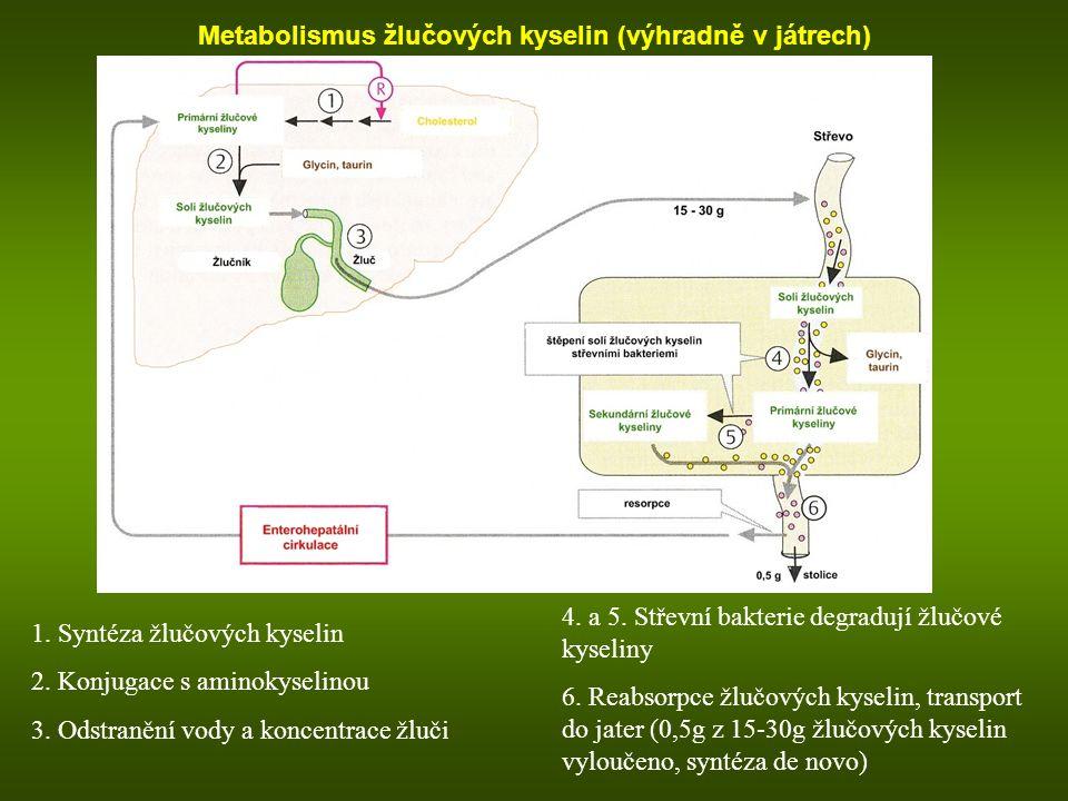 Metabolismus žlučových kyselin (výhradně v játrech) 1. Syntéza žlučových kyselin 2. Konjugace s aminokyselinou 3. Odstranění vody a koncentrace žluči