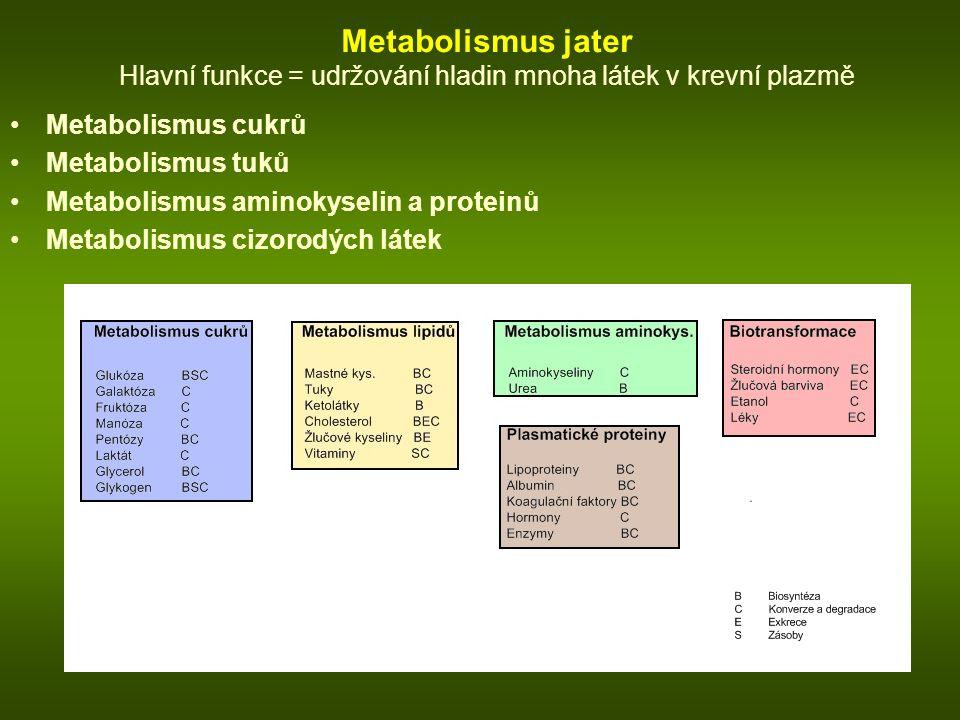 Metabolismus jater Hlavní funkce = udržování hladin mnoha látek v krevní plazmě Metabolismus cukrů Metabolismus tuků Metabolismus aminokyselin a proteinů Metabolismus cizorodých látek