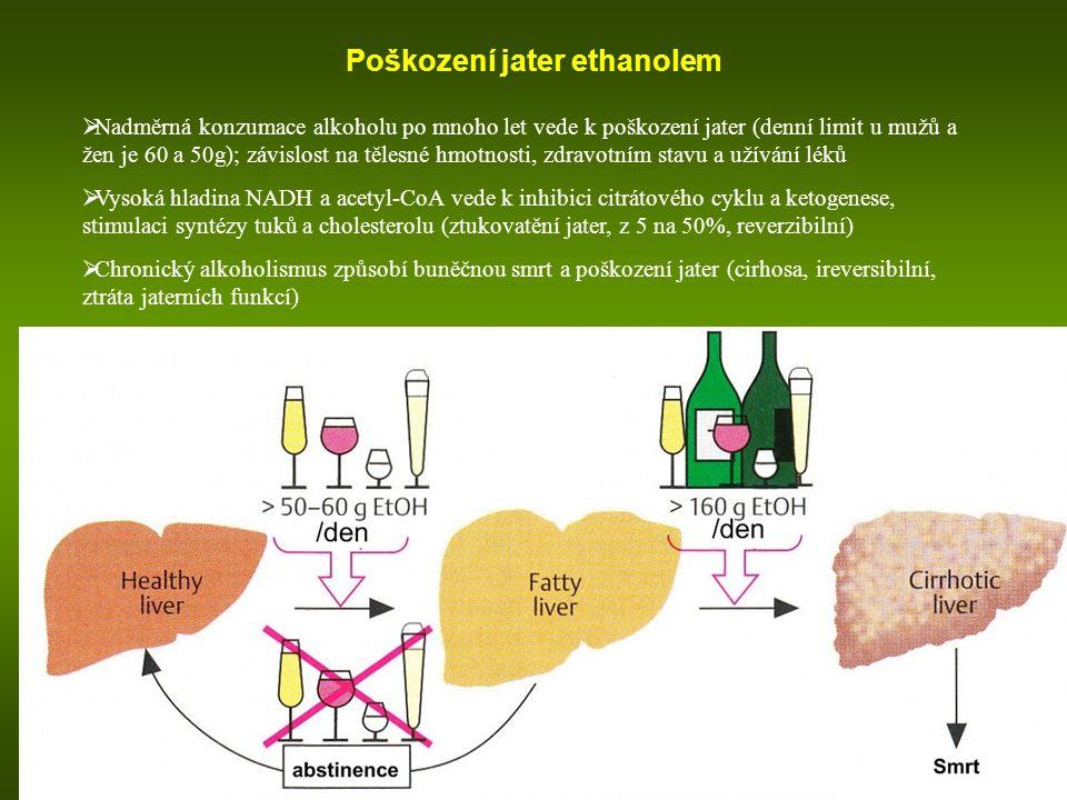 Poškození jater ethanolem  Nadměrná konzumace alkoholu po mnoho let vede k poškození jater (denní limit u mužů a žen je 60 a 50g); závislost na tělesné hmotnosti, zdravotním stavu a užívání léků  Vysoká hladina NADH a acetyl-CoA vede k inhibici citrátového cyklu a ketogenese, stimulaci syntézy tuků a cholesterolu (ztukovatění jater, z 5 na 50%, reverzibilní)  Chronický alkoholismus způsobí buněčnou smrt a poškození jater (cirhosa, ireversibilní, ztráta jaterních funkcí)