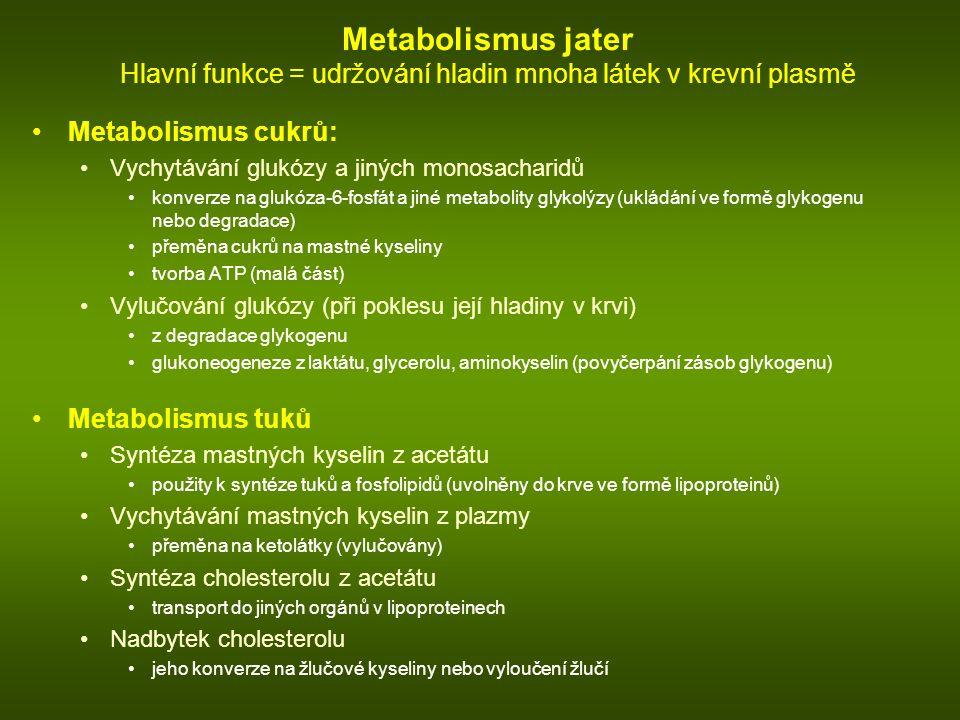 Metabolismus jater Hlavní funkce = udržování hladin mnoha látek v krevní plasmě Metabolismus cukrů: Vychytávání glukózy a jiných monosacharidů konverze na glukóza-6-fosfát a jiné metabolity glykolýzy (ukládání ve formě glykogenu nebo degradace) přeměna cukrů na mastné kyseliny tvorba ATP (malá část) Vylučování glukózy (při poklesu její hladiny v krvi) z degradace glykogenu glukoneogeneze z laktátu, glycerolu, aminokyselin (povyčerpání zásob glykogenu) Metabolismus tuků Syntéza mastných kyselin z acetátu použity k syntéze tuků a fosfolipidů (uvolněny do krve ve formě lipoproteinů) Vychytávání mastných kyselin z plazmy přeměna na ketolátky (vylučovány) Syntéza cholesterolu z acetátu transport do jiných orgánů v lipoproteinech Nadbytek cholesterolu jeho konverze na žlučové kyseliny nebo vyloučení žlučí