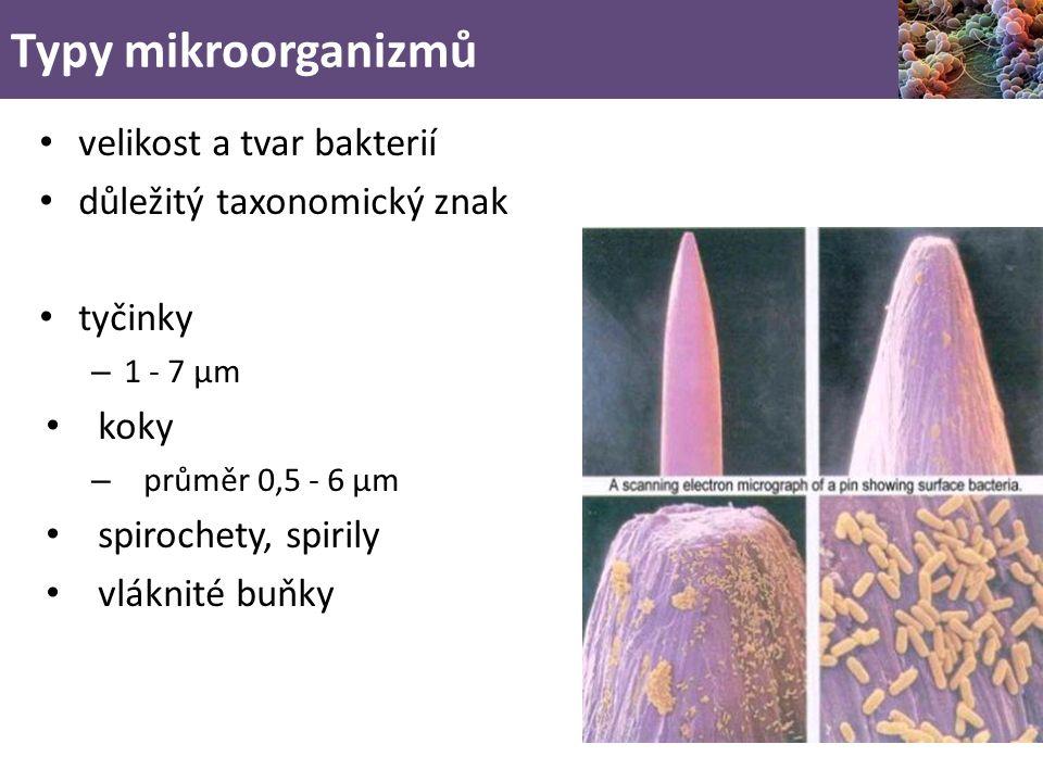 Typy mikroorganizmů velikost a tvar bakterií důležitý taxonomický znak tyčinky – 1 - 7 µm koky – průměr 0,5 - 6 µm spirochety, spirily vláknité buňky