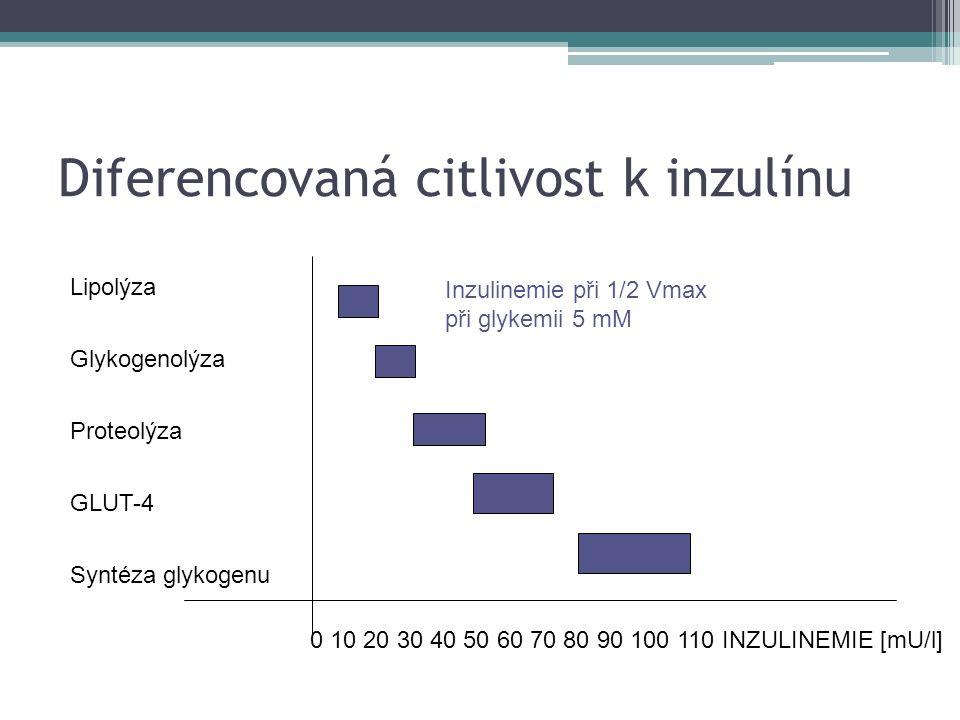 Diferencovaná citlivost k inzulínu Lipolýza Glykogenolýza Proteolýza GLUT-4 Syntéza glykogenu 0 10 20 30 40 50 60 70 80 90 100 110 INZULINEMIE [mU/l] Inzulinemie při 1/2 Vmax při glykemii 5 mM