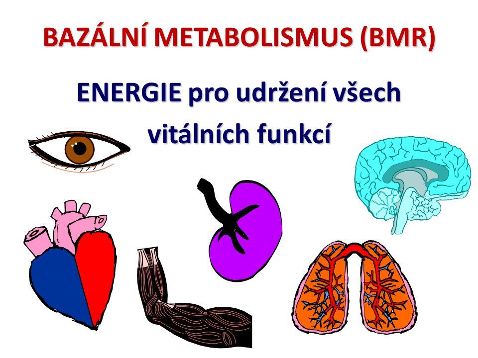 ENERGETICKÝ METABOLISMUS 4. Výška, váha a povrch těla (čím větší - tím větší) 5.