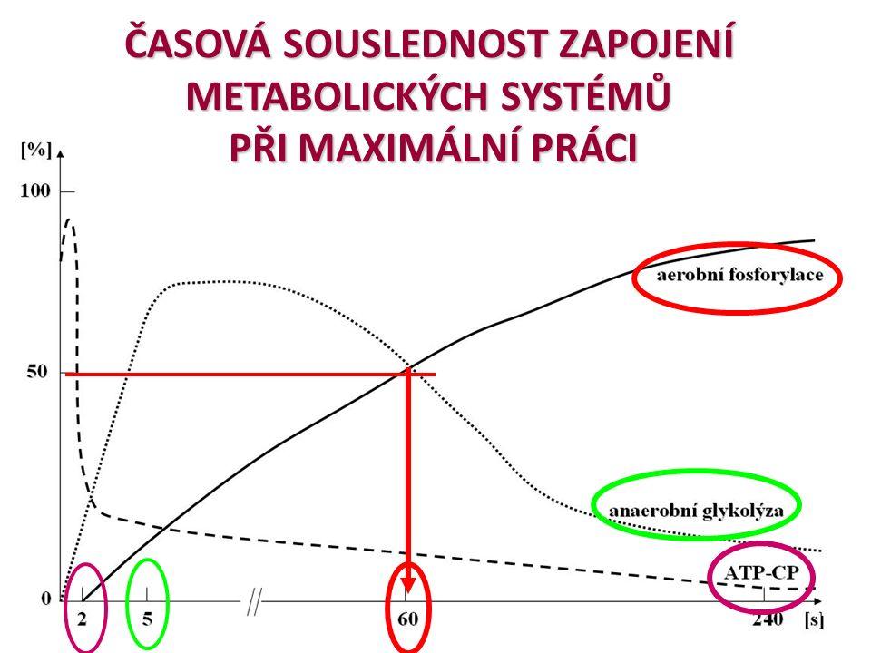 ENERGETICKÉ SYSTÉMY ATP, ATP – CP komplex (makroergní fosfáty): ATP, ATP – CP komplex (makroergní fosfáty): nejrychlejší (pohotovostní) zdroj energie, nejrychlejší (pohotovostní) zdroj energie, ALAKTÁTOVÝ ZDROJ ATP ALAKTÁTOVÝ ZDROJ ATP ANAEROBNÍ ZISK ATP ANAEROBNÍ ZISK ATP zpracování pouze cukrů (glykogen a glukóza) zpracování pouze cukrů (glykogen a glukóza) LAKTÁTOVÝ systém LAKTÁTOVÝ systém AEROBNÍ (KYSLÍKOVÝ) ZISK ATP: AEROBNÍ (KYSLÍKOVÝ) ZISK ATP: zpracování cukrů, tuků i bílkovin (aminokyselin) zpracování cukrů, tuků i bílkovin (aminokyselin) Krebsův cyklus, dýchací řetězec Krebsův cyklus, dýchací řetězec ALAKTÁTOVÝ SYSTÉM ALAKTÁTOVÝ SYSTÉM