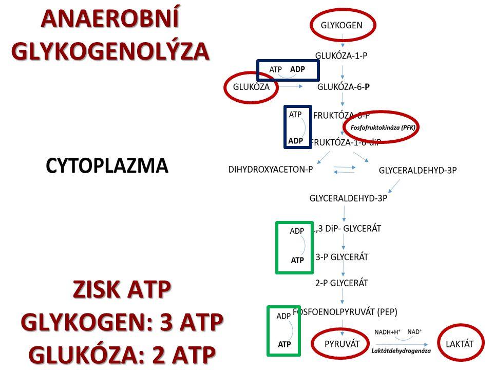 ENERGETICKÉ SYSTÉMY  jediným PŘÍMÝM zdrojem energie pro svalovou činnost je chemická látka ADENOZINTRIFOSFÁT – ATP !!.
