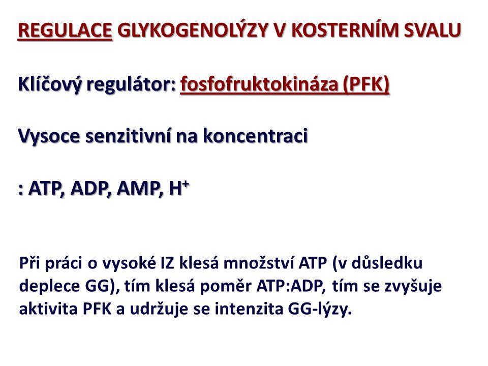 ANAEROBNÍGLYKOGENOLÝZA ZISK ATP GLYKOGEN: 3 ATP GLUKÓZA: 2 ATP