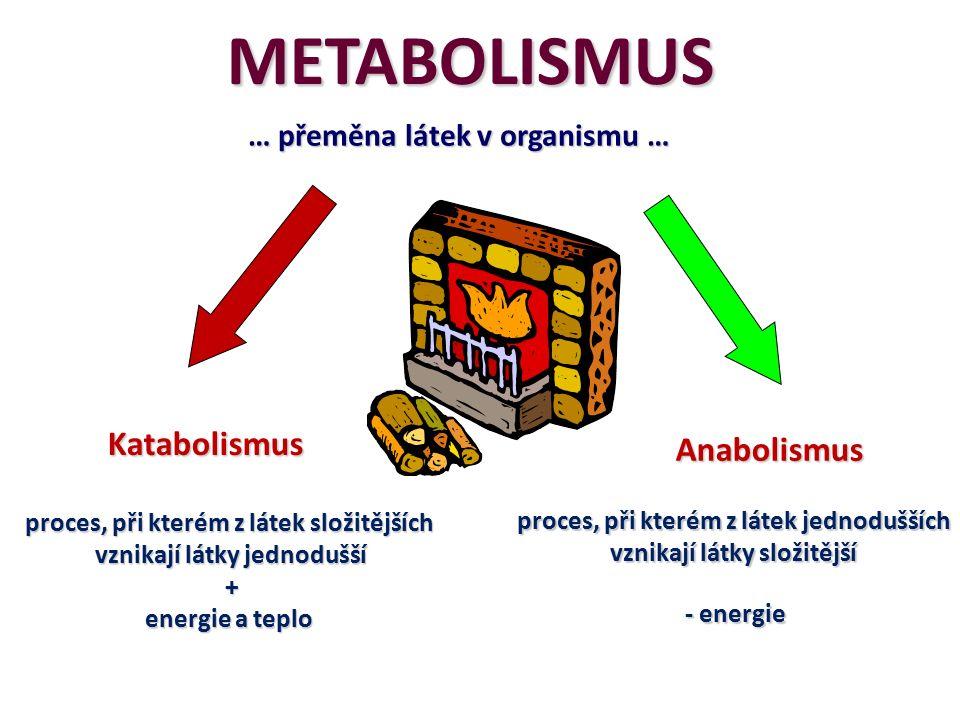 METABOLISMUS Katabolismus proces, při kterém z látek složitějších vznikají látky jednodušší + energie a teplo Anabolismus proces, při kterém z látek jednodušších vznikají látky složitější - energie … přeměna látek v organismu …