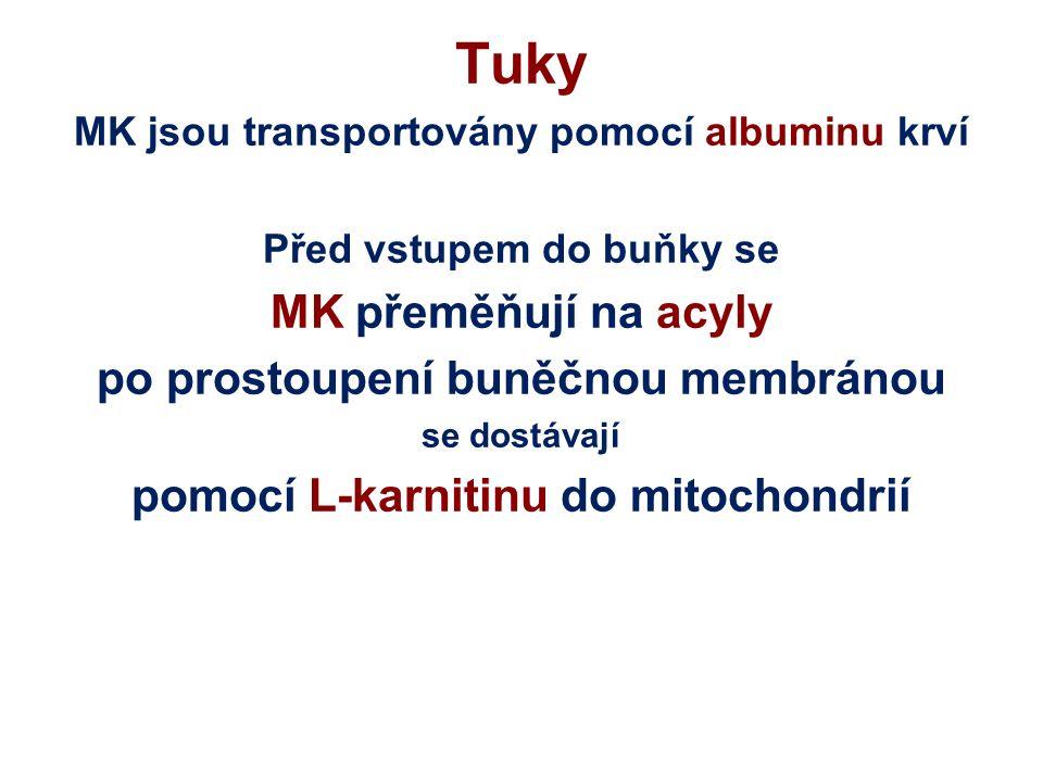 Tuky Triglyceridy (TG) jsou sloučeniny glycerolu a tři MK (nerozpustné ve vodě, ideální zásobárna energie) TG jsou rozkládány v tukových, svalových nebo jaterních buňkách v tenkém střevě enzymem LIPÁZOU na glycerol a tři MK : MOBILIZACE - hlad, tělesná práce nebo chlad