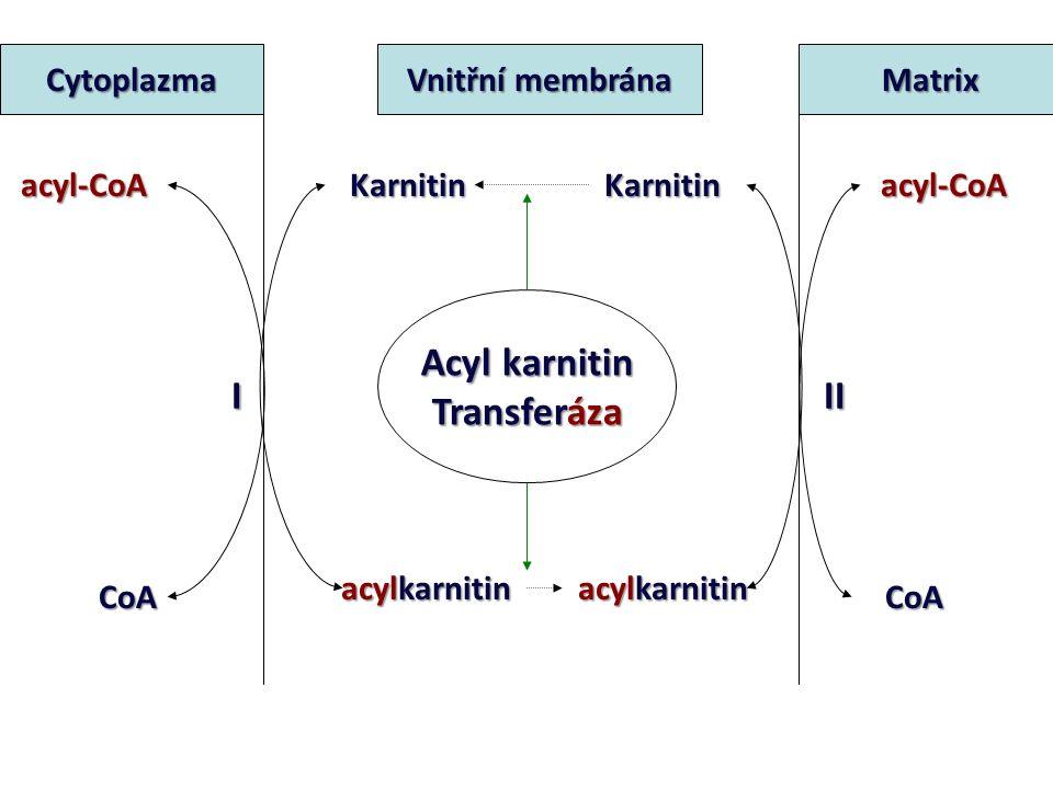 VZNIK acyl-CoA MK + ATP + CoAAcyl-CoA + AMP + PPi acyl CoA syntetáza Mg 2+ energie