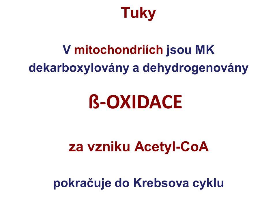acyl-CoAacyl-CoA CoA CoA KarnitinKarnitin acylkarnitin Cytoplazma Vnitřní membrána Matrix III Acyl karnitin Transferáza