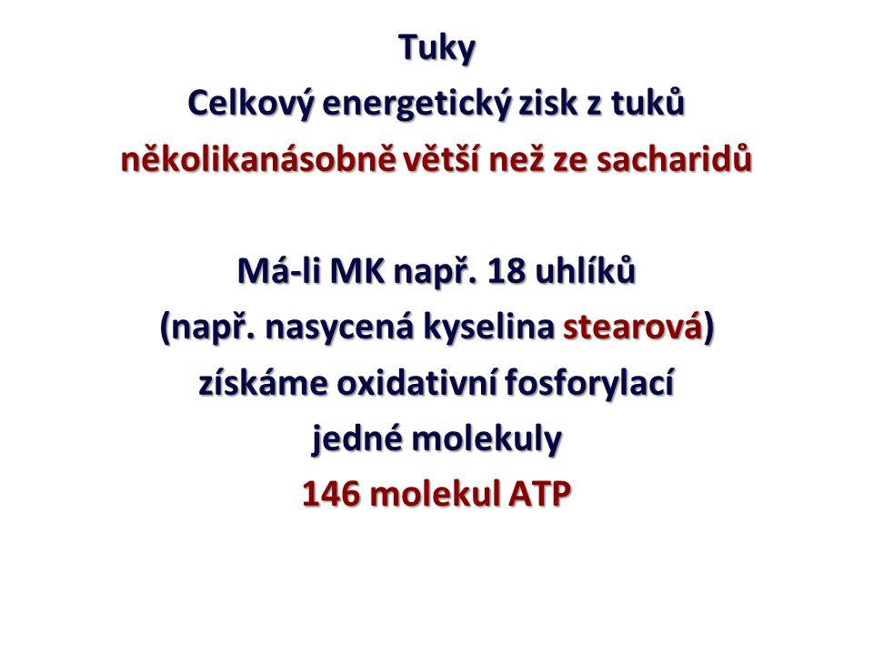 Tuky V mitochondriích jsou MK dekarboxylovány a dehydrogenovány za vzniku Acetyl-CoA pokračuje do Krebsova cyklu ß-OXIDACE