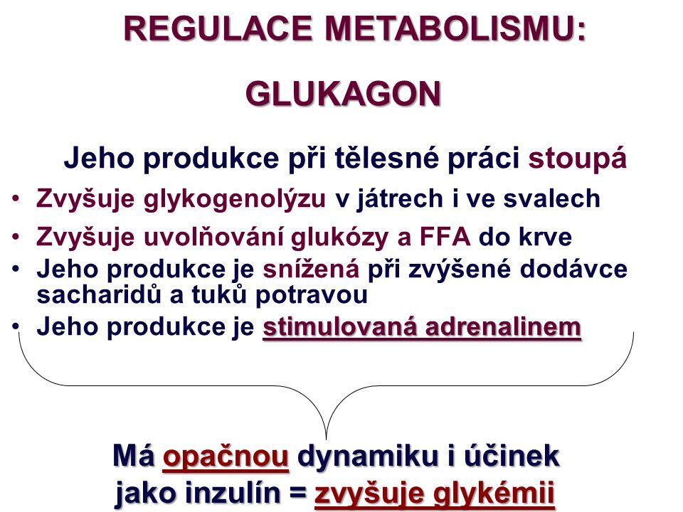 REGULACE METABOLISMU: ADRENALIN Při tělesné práci stoupá v závislosti na intenzitě zatížení (čím vyšší IZ, tím vyšší produkce adrenalinu) Zvyšuje glykogenolýzu v játrech i ve svalech ZvyšujeZvyšuje uvolňování glukózy a FFA do krve opačnou Má opačnou dynamiku i účinek INZULINzvyšuje glykémii jako INZULIN = zvyšuje glykémii