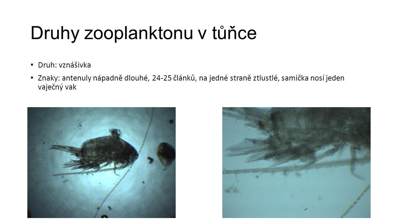 Druhy zooplanktonu v tůňce Druh: vznášivka Znaky: antenuly nápadně dlouhé, 24-25 článků, na jedné straně ztlustlé, samička nosí jeden vaječný vak