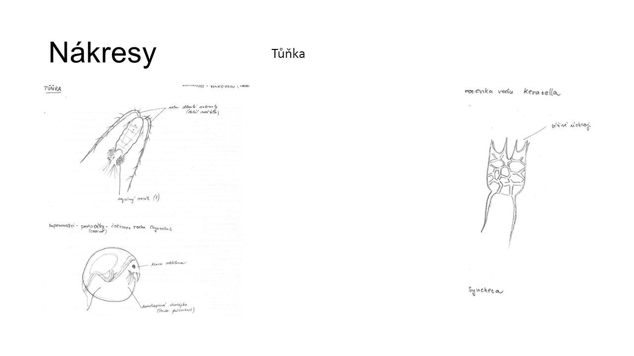Nákresy Tůňka