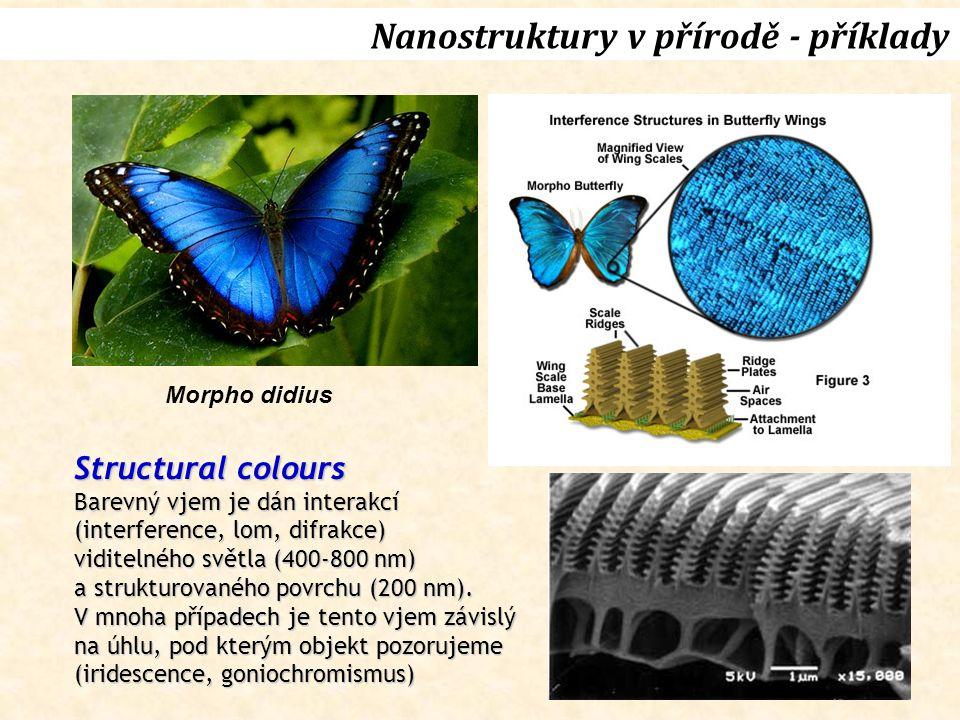 Nanostruktury v přírodě - příklady Morpho didius Structural colours Barevný vjem je dán interakcí (interference, lom, difrakce) viditelného světla (400-800 nm) a strukturovaného povrchu (200 nm).