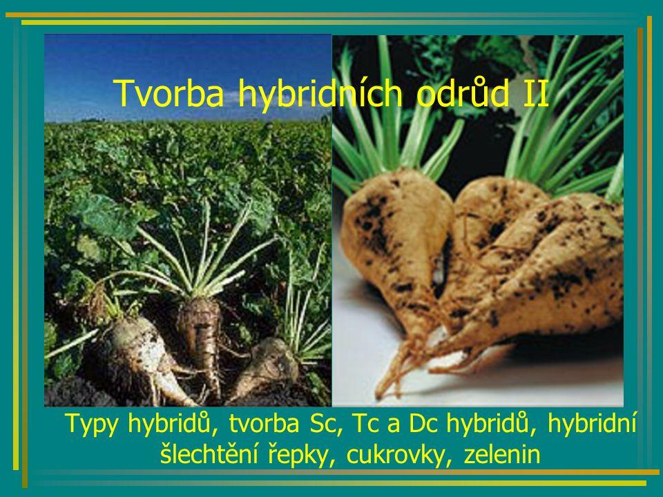 Tvorba hybridních odrůd II Typy hybridů, tvorba Sc, Tc a Dc hybridů, hybridní šlechtění řepky, cukrovky, zelenin