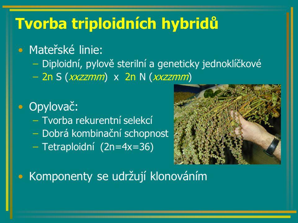 Tvorba triploidních hybridů Mateřské linie: –Diploidní, pylově sterilní a geneticky jednoklíčkové –2n S (xxzzmm) x 2n N (xxzzmm) Opylovač: –Tvorba rekurentní selekcí –Dobrá kombinační schopnost –Tetraploidní (2n=4x=36) Komponenty se udržují klonováním