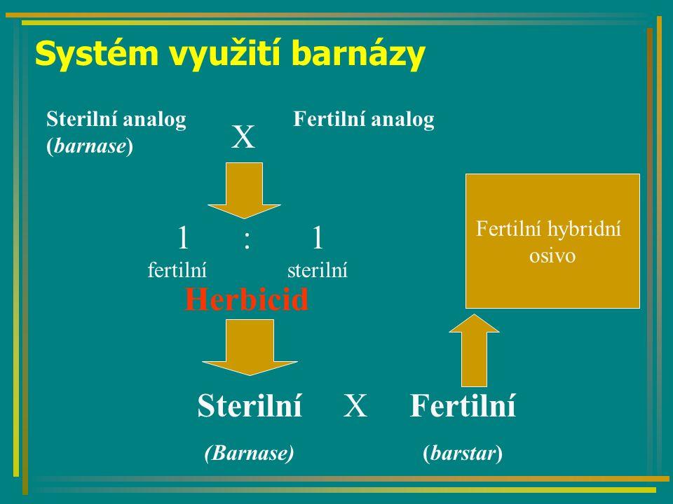 Systém využití barnázy Sterilní analog (barnase) X Fertilní analog 1: 1 fertilnísterilní Herbicid Sterilní (Barnase) X Fertilní hybridní osivo Fertilní (barstar)