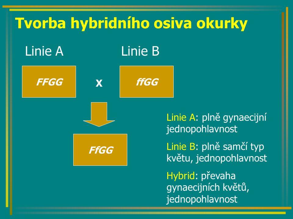 Tvorba hybridního osiva okurky Linie A Linie B FFGGffGG X FfGG Linie A: plně gynaecijní jednopohlavnost Linie B: plně samčí typ květu, jednopohlavnost Hybrid: převaha gynaecijních květů, jednopohlavnost
