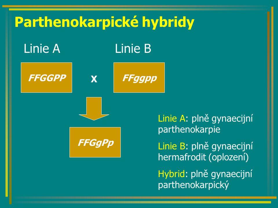 Parthenokarpické hybridy Linie A Linie B FFGGPPFFggpp X FFGgPp Linie A: plně gynaecijní parthenokarpie Linie B: plně gynaecijní hermafrodit (oplození) Hybrid: plně gynaecijní parthenokarpický