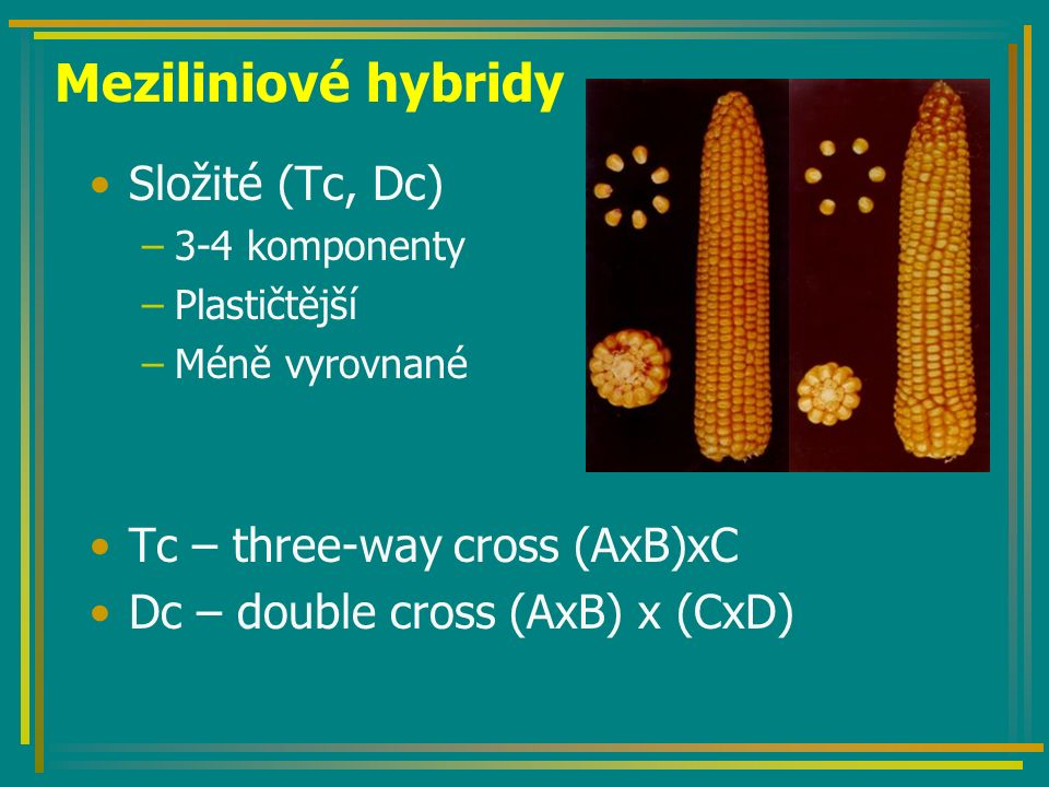 Tvorba Sc hybridů klasicky a s CMS P: ♀ A (kastrace) x ♂ B F 1 :Sc AB X P: ♀ A` (S) rfrf x ♂ B (N)RfRf F 1 :Sc AB (S) Rfrf - fertilní