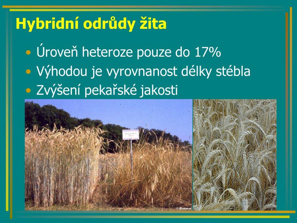 Tvorba hybridů žita Vychází se z několika typů pylové sterility –Hlavně cytoplazmaticko jaderná Tvorba inbredních linií Tvorby sterilního analoga Testy kombinační schopnosti Tvorba hybridní odrůdy