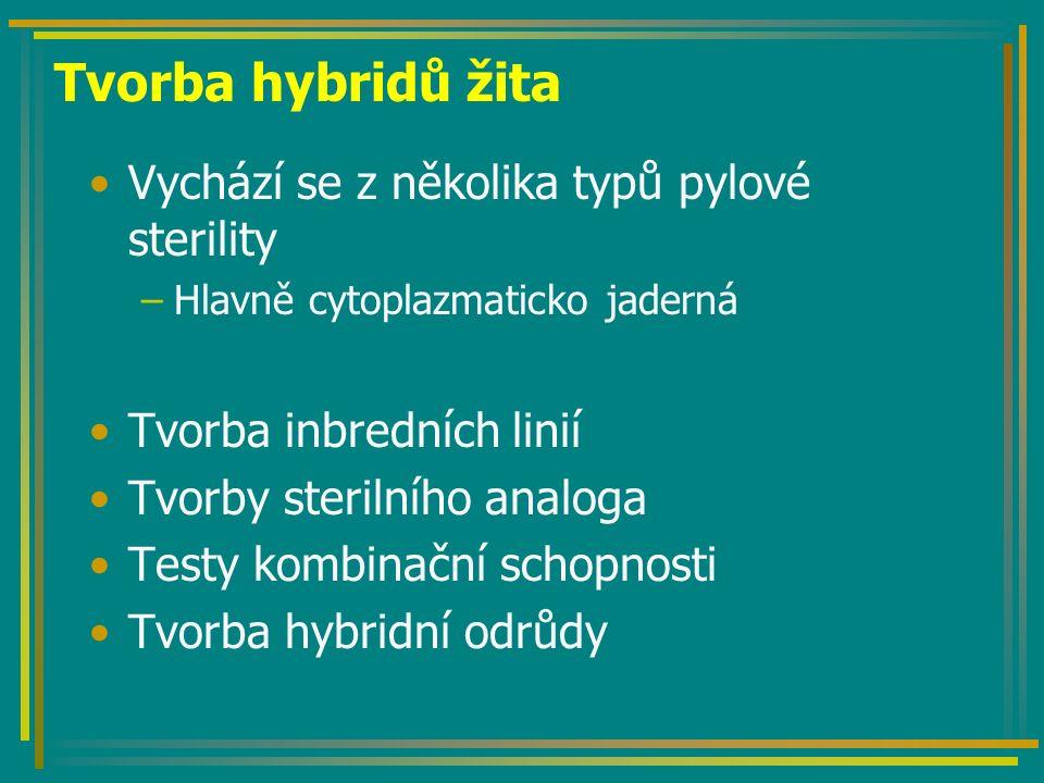 Tvorba hybridů žita Výsledný hybrid je komponovaného typu P: ♀ A` (S) rfrf x ♂ B (N)rfrf F 1 :Sc AB (S) rfrf – sterilní K osivu se přidává 10% opylovače (kvalitní uznaná odrůda)